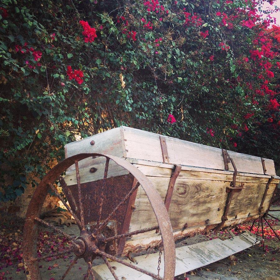 花摘みの器具。