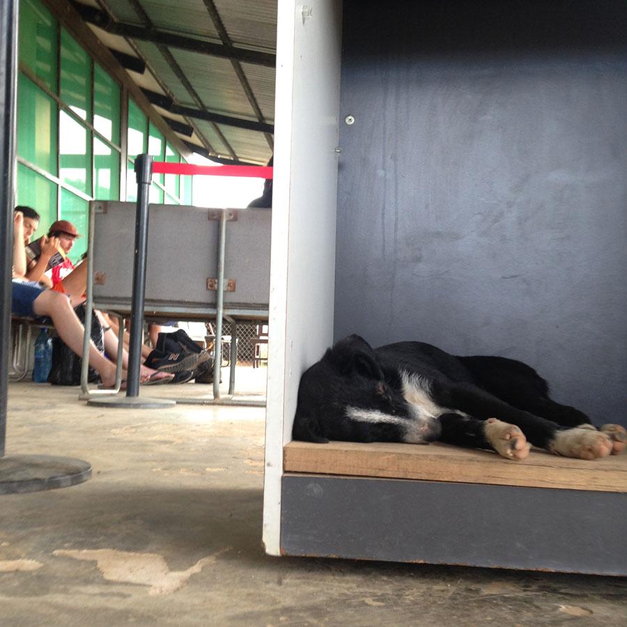 空港内で眠るストリートドッグ。