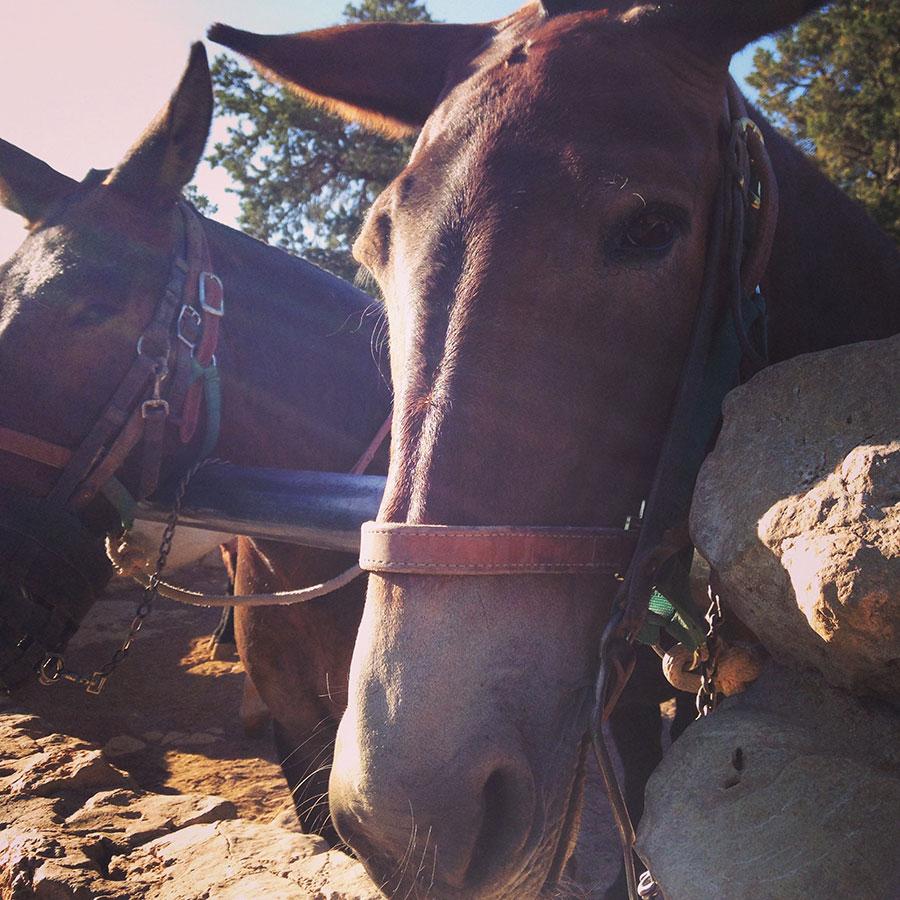 馬のお出迎え。谷底ですれ違った馬かな?
