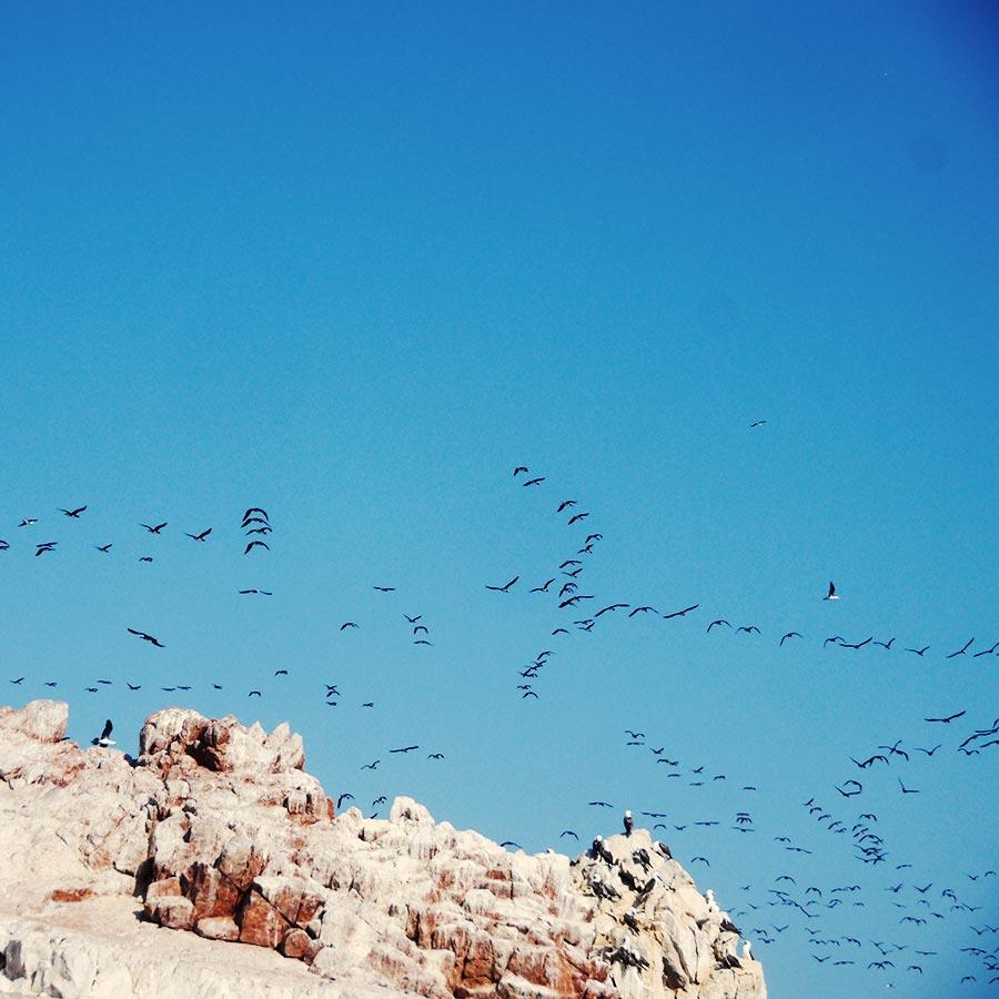 空を駆ける万羽の鳥