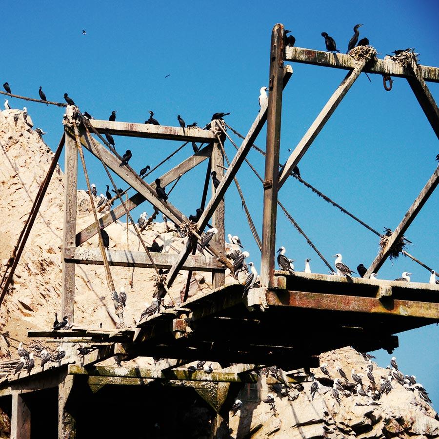突き橋にとまる野鳥