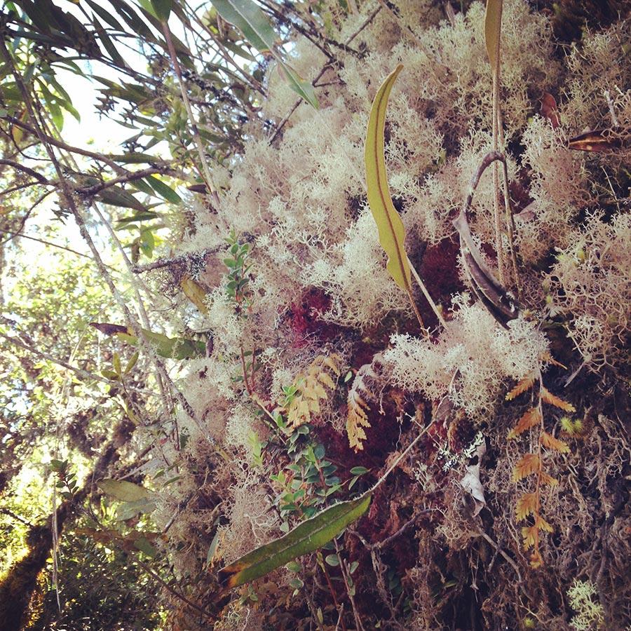 マチュピチュ山に群生する植物
