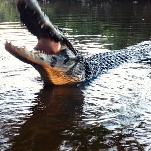 アマゾンツアー2日目は、アナコンダ捕獲とピラニア釣り。ワニの餌付けも忘れずに。