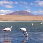 ウユニ湖横断ツアー2日目。火山地帯の奇岩、サルバドールダリが描いた湖を堪能。