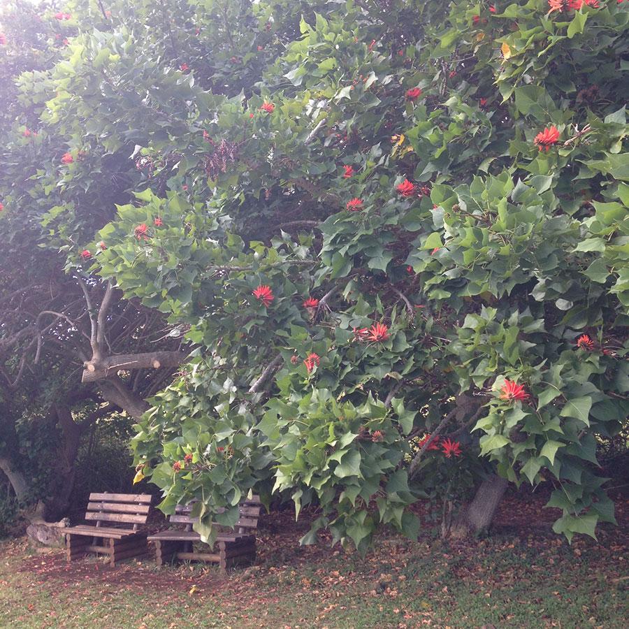 赤い花とベンチ。