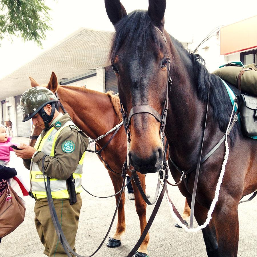 馬だけカメラ目線。