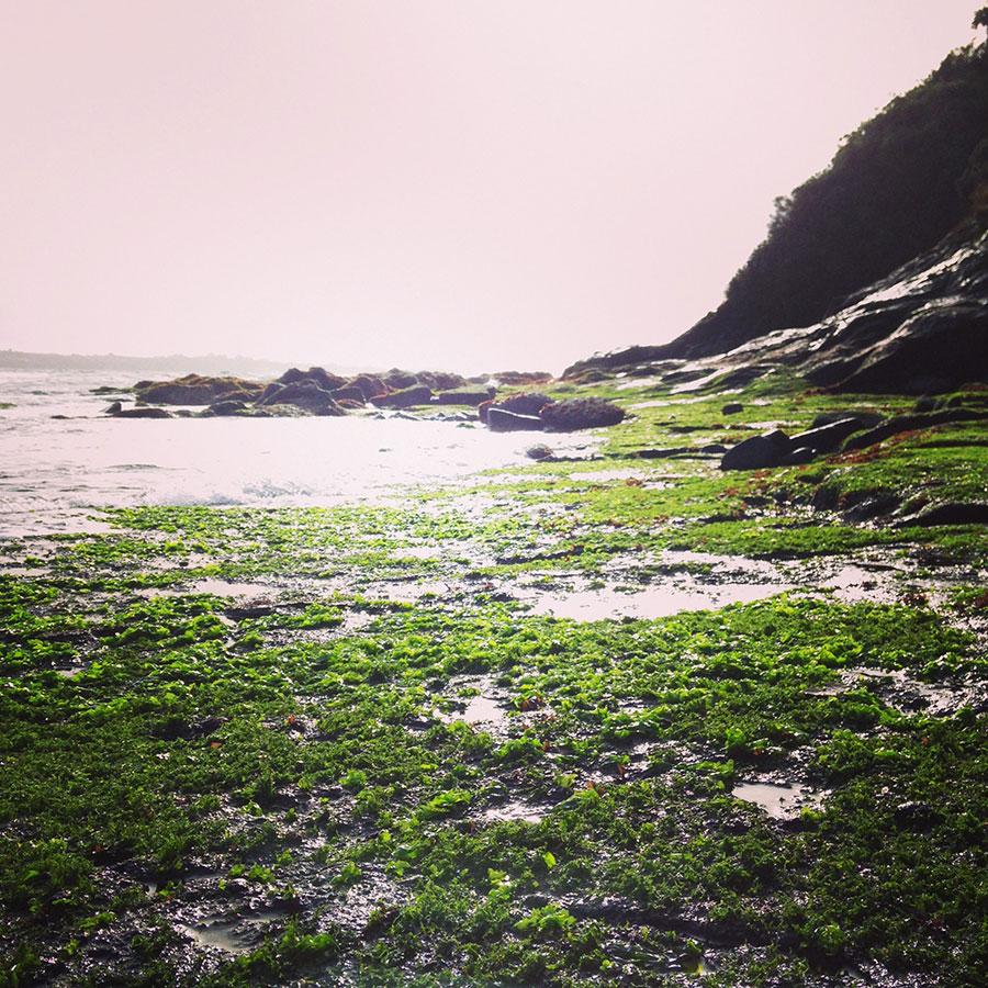 お台場近くの海岸。