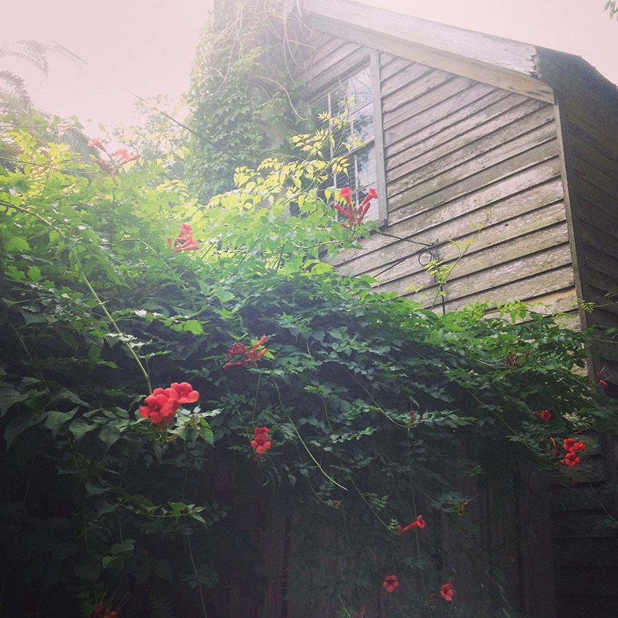 赤い花と木造の家。