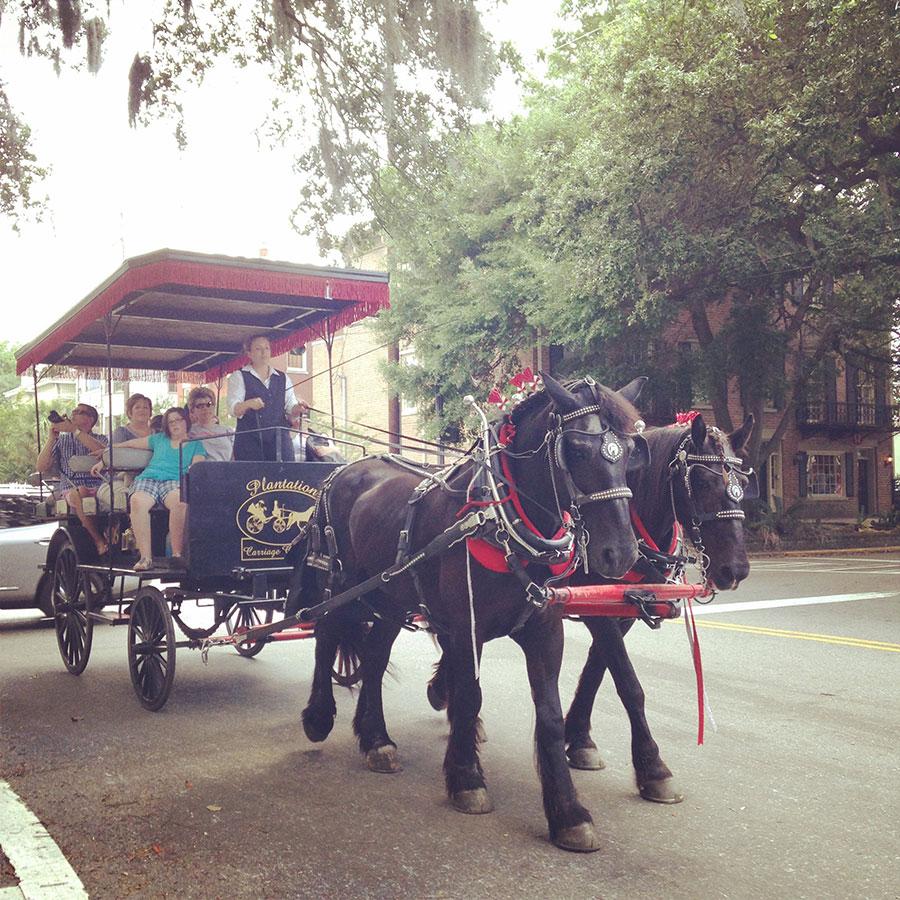サバンナの観光馬車。二頭引き!