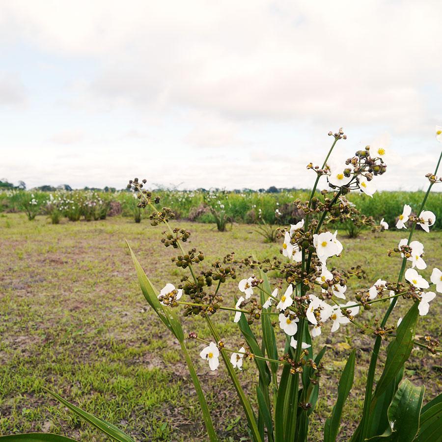 アマゾンの湿地。