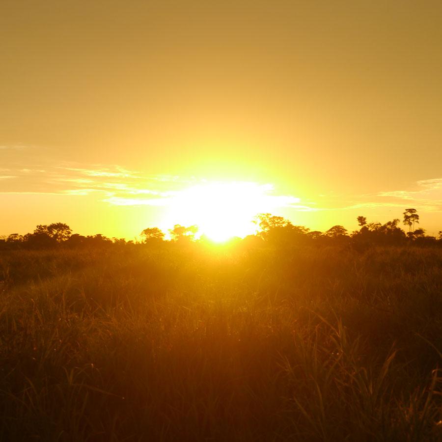 アマゾンの朝日。